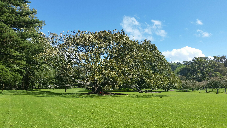 Wide Tree, Big Roots